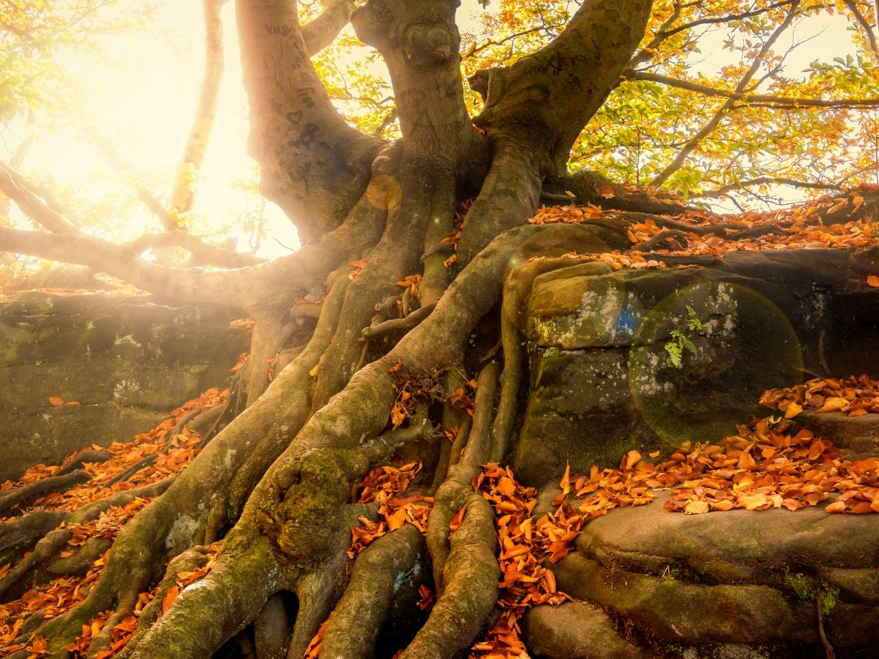 tree roots with sun shining through